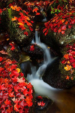 ✯ Autumn in the Adirondacks