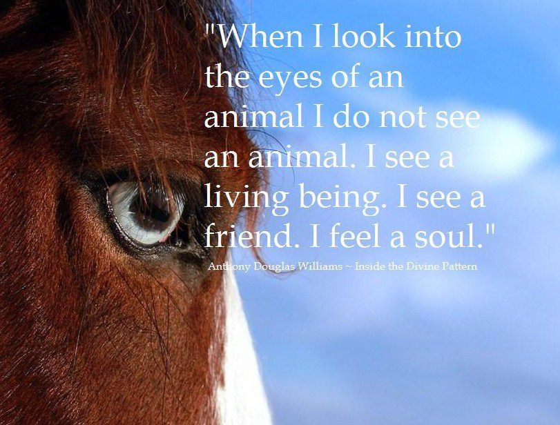 """""""When I Look Into The Eyes Of An Animal I Do Not See An"""