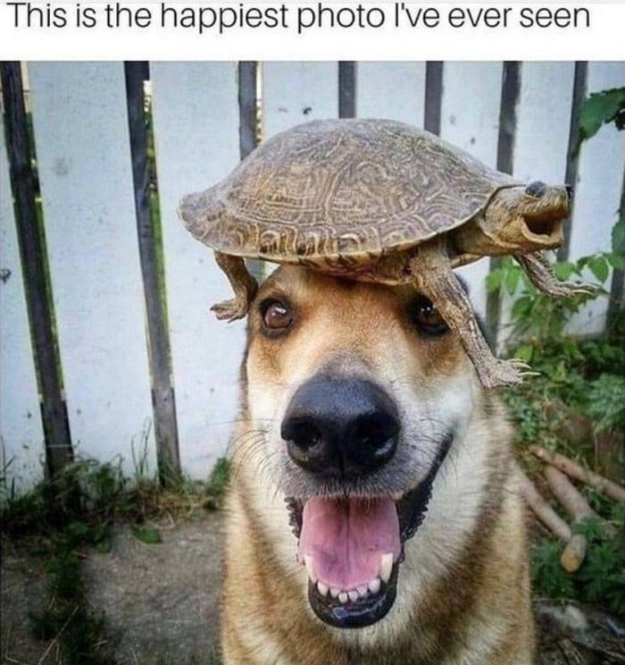Funny Animal Pictures of The Day Release 8 (57 Pics) #funnyanimalpictures