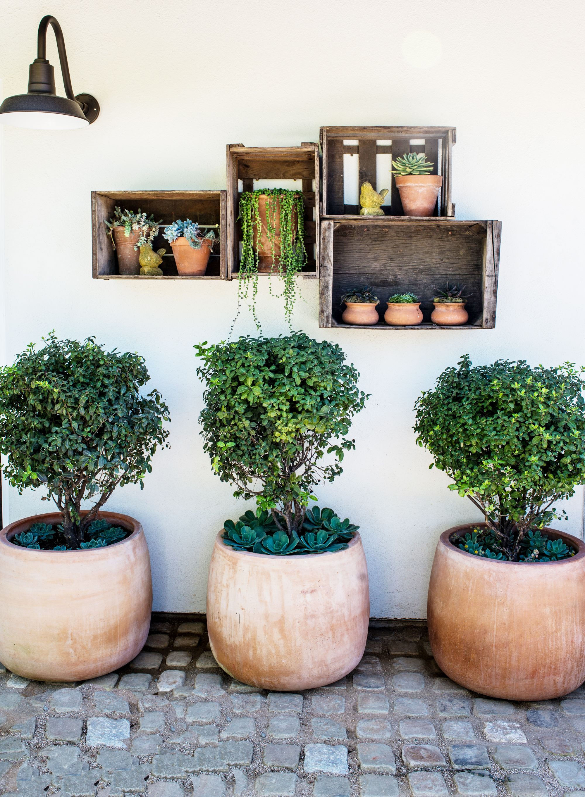 Small Potted Plants In Built In Shelves In Backyard And