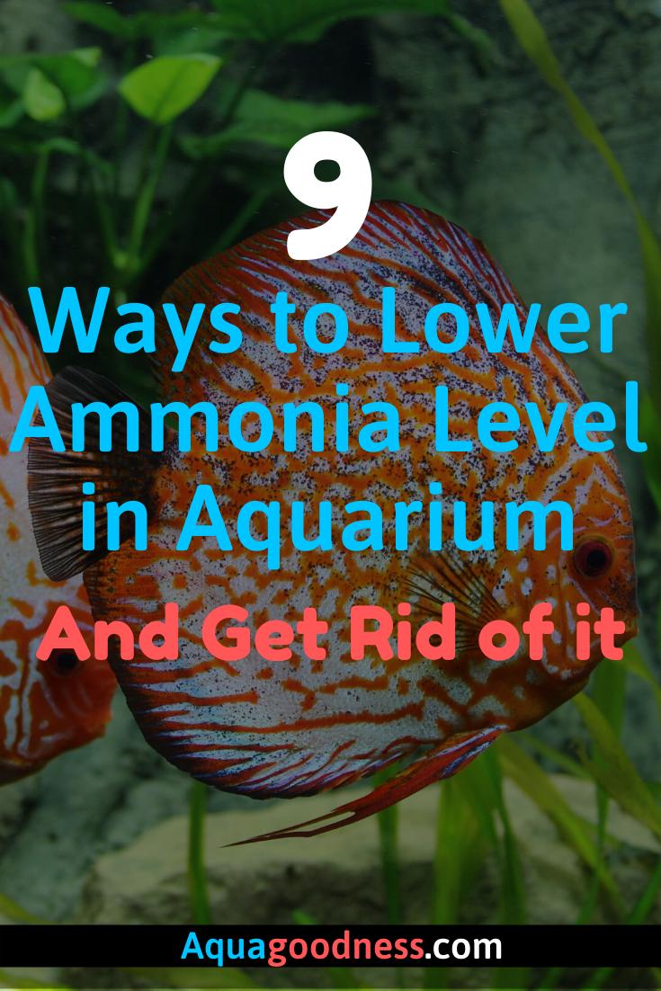 470f6a05c0c30e01dde84bf8c828aca6 - How To Get Ammonia Out Of My Fish Tank