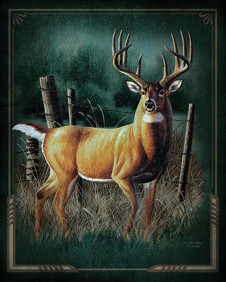 whitetail deer - Google Search | Wildlife Art | Pinterest | Venado ...