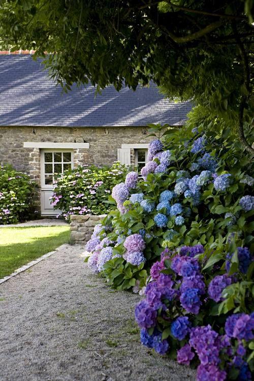 Pin de Irna De Jager en tuin Pinterest Hortensias, Jardines y Jardín