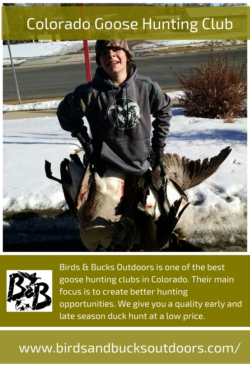 Colorado Goose Hunting Club Goose hunting, Canadian