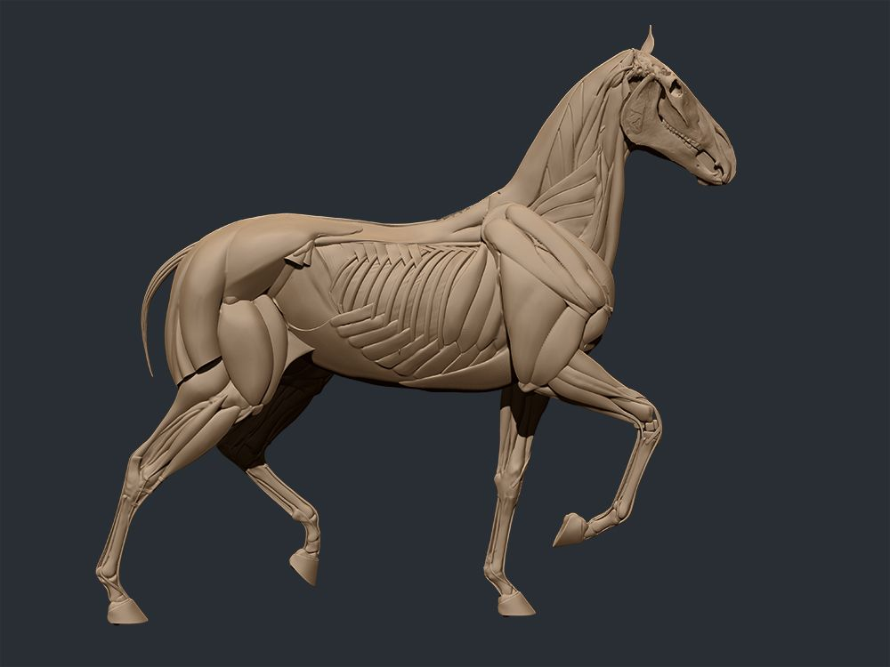 Horse_3.jpg | Kunst kamer sanat odası | Pinterest | Pferd Anatomie ...