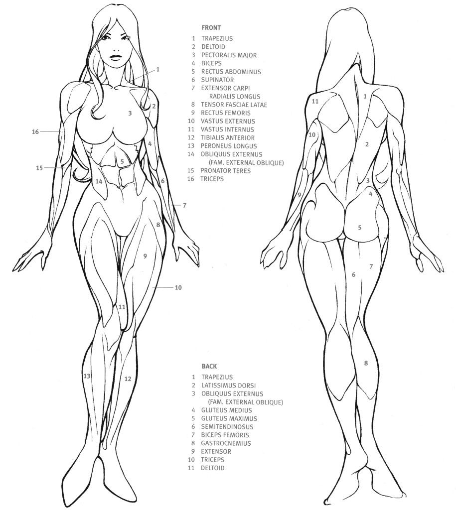 body drawing reference 39 in drawing references and resources