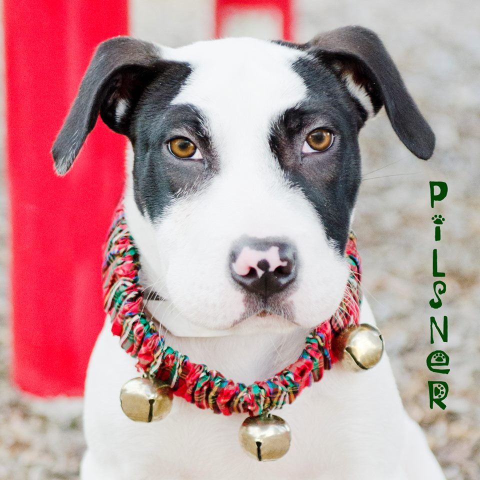 Nate's Honor Animal Rescue Animal rescue, Pet adoption