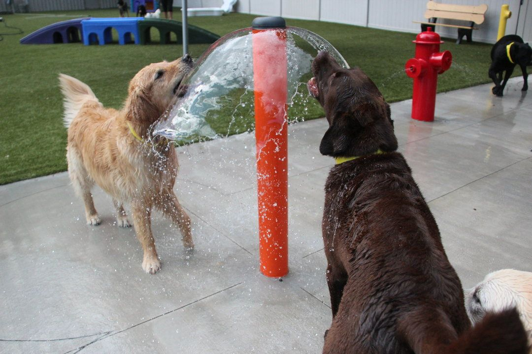 Pin By H2o Fido On Dog Spray Parks Dog Water Parks Splash Pads For Dogs By H2o Fido Dog Park Design Dog Hotel Dog Park