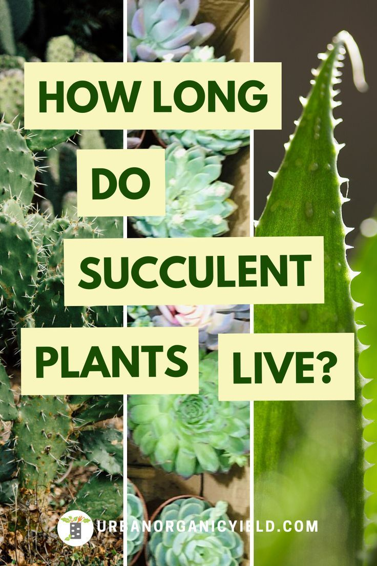 Pin on Succulent and Cacti Care