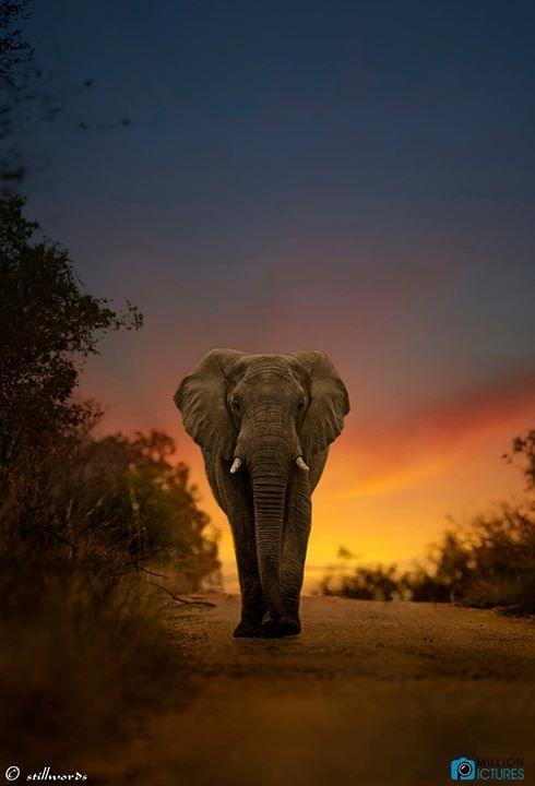 fa103bc43f3eb Be an Elephant. Stand Tall, and Stroll with Confidence even when alone in  an African Desert. Being able to remember things is also a perk.