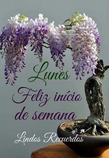 Lunes Feliz Inicio De Semana Buenos Dias Saludos Saludos De