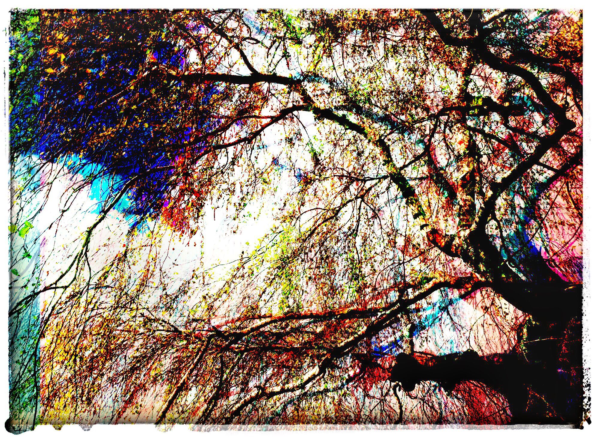 Tree at the Post Office Glitch, Anne Hennessey