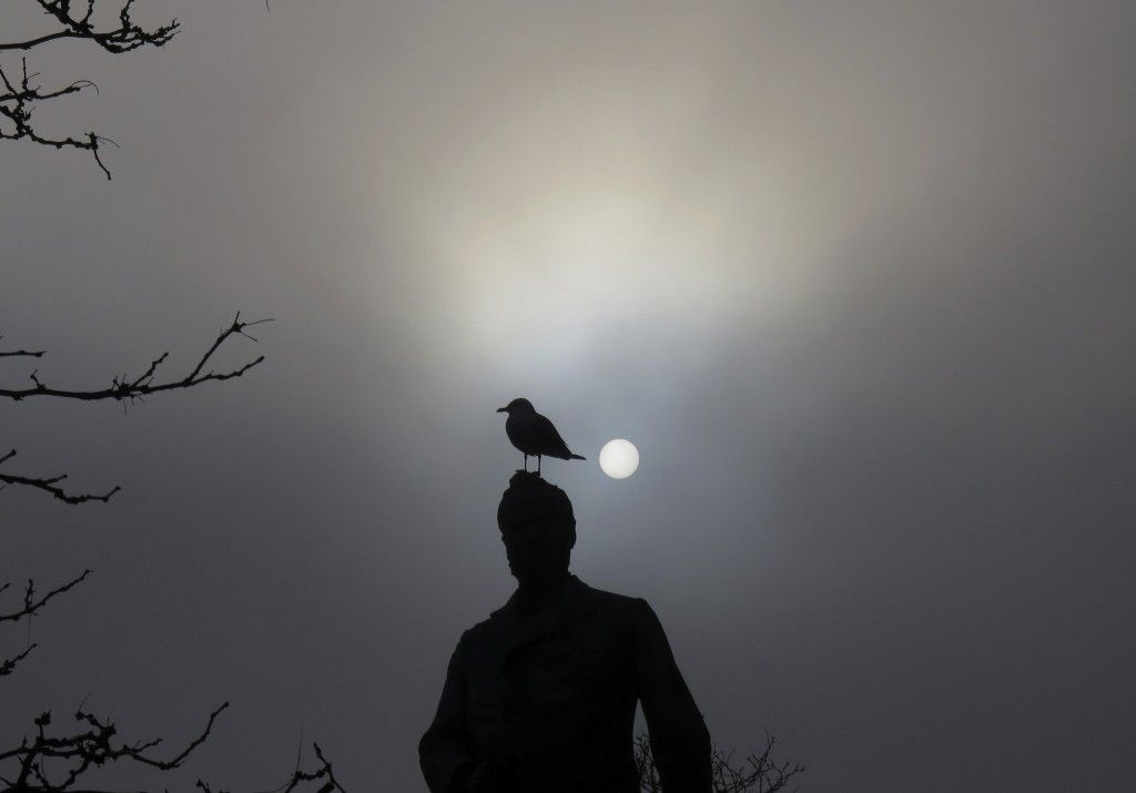 Helping out the bird brains | Pollution | Light pollution