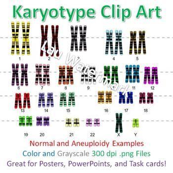48++ Biology karyotype worksheet answers key Online