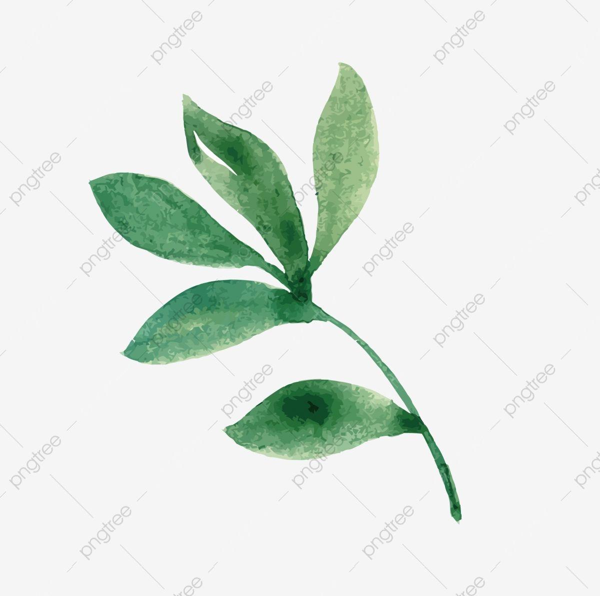 الورقة الخضراء صور الزعتر المواد خضرة فنية اوراق خضراء ورقة الشجر Png والمتجهات للتحميل مجانا Plant Leaves Leaves Plants