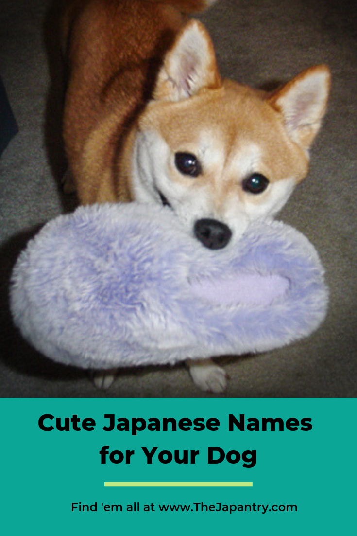 Cute Japanese names for your dog Cute names for dogs