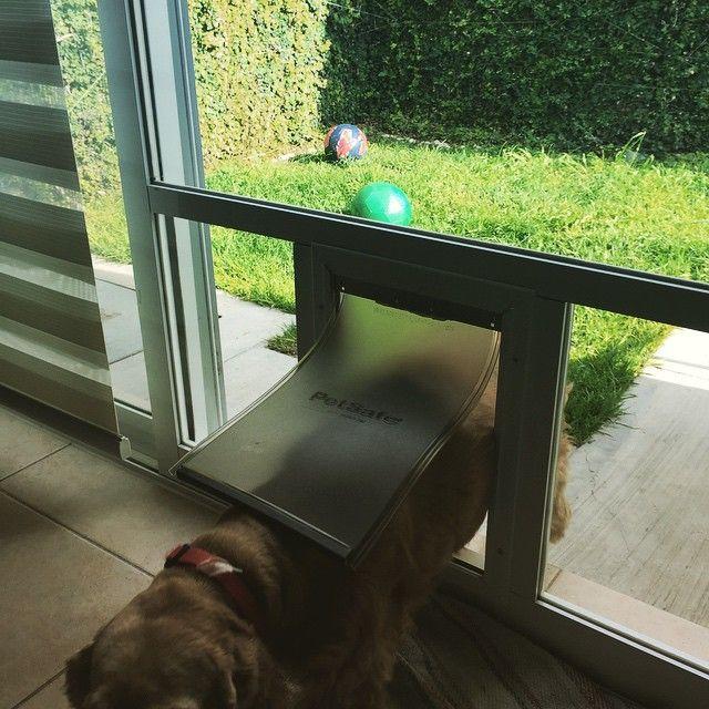 Puerta para perros freedom aluminium door en acci n http for Puertas para mascotas
