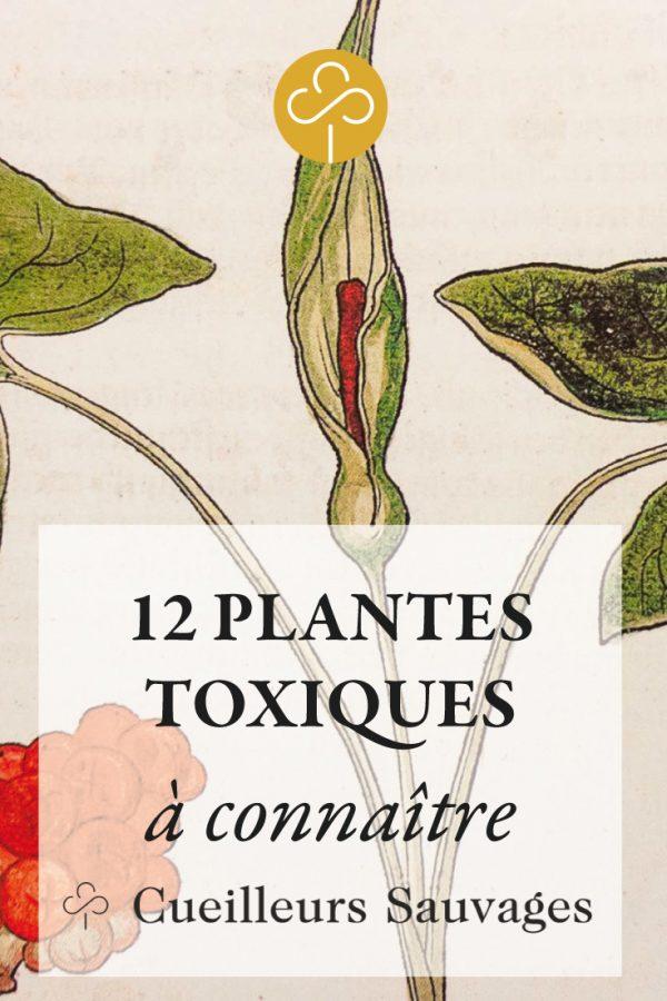 Les 12 Plantes Sauvages Toxiques A Connaitre Cueilleurs Sauvages Plantes Toxiques Plantes Sauvages Plantes Sauvages Comestibles