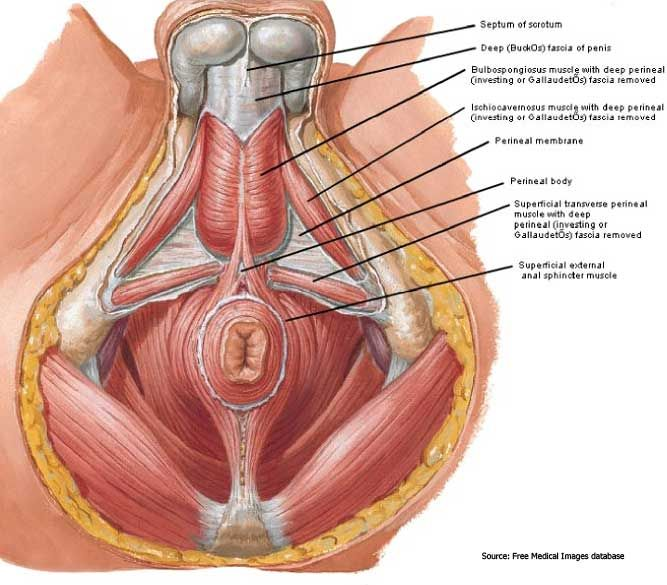 Lovely Male Pelvic Floor