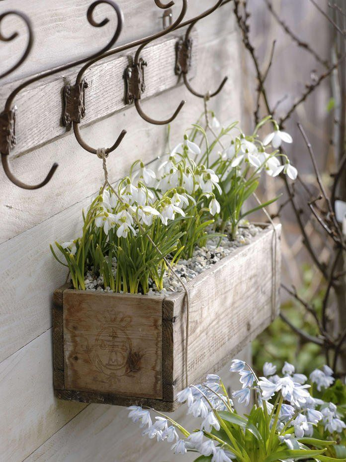 Decorating ideas with snowdrops -  Snowdrops in a wooden box  - #ContainerGardening #decorating #GardenDesign #Gardening #ideas #Landscaping #Plants #snowdrops