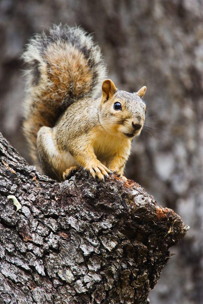 Squirrel Squirrel, Cute animals, Texas animals