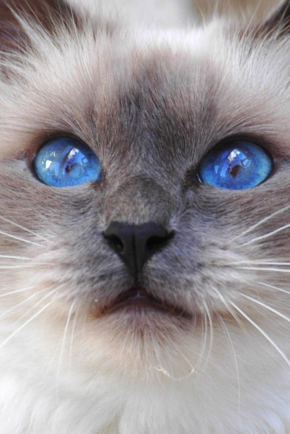 Pin by Liz Cecchini on A Cat's Love Beautiful cats, Cute