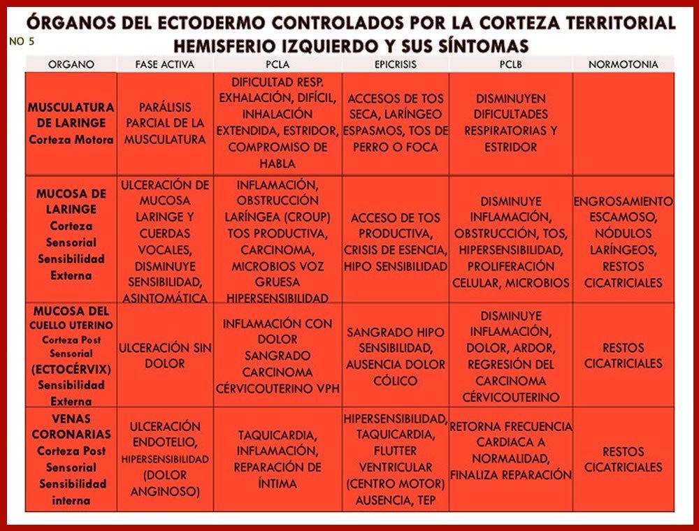 ORGANOS Y SUS SINTOMAS 5 | conflictos biologicos | Pinterest ...