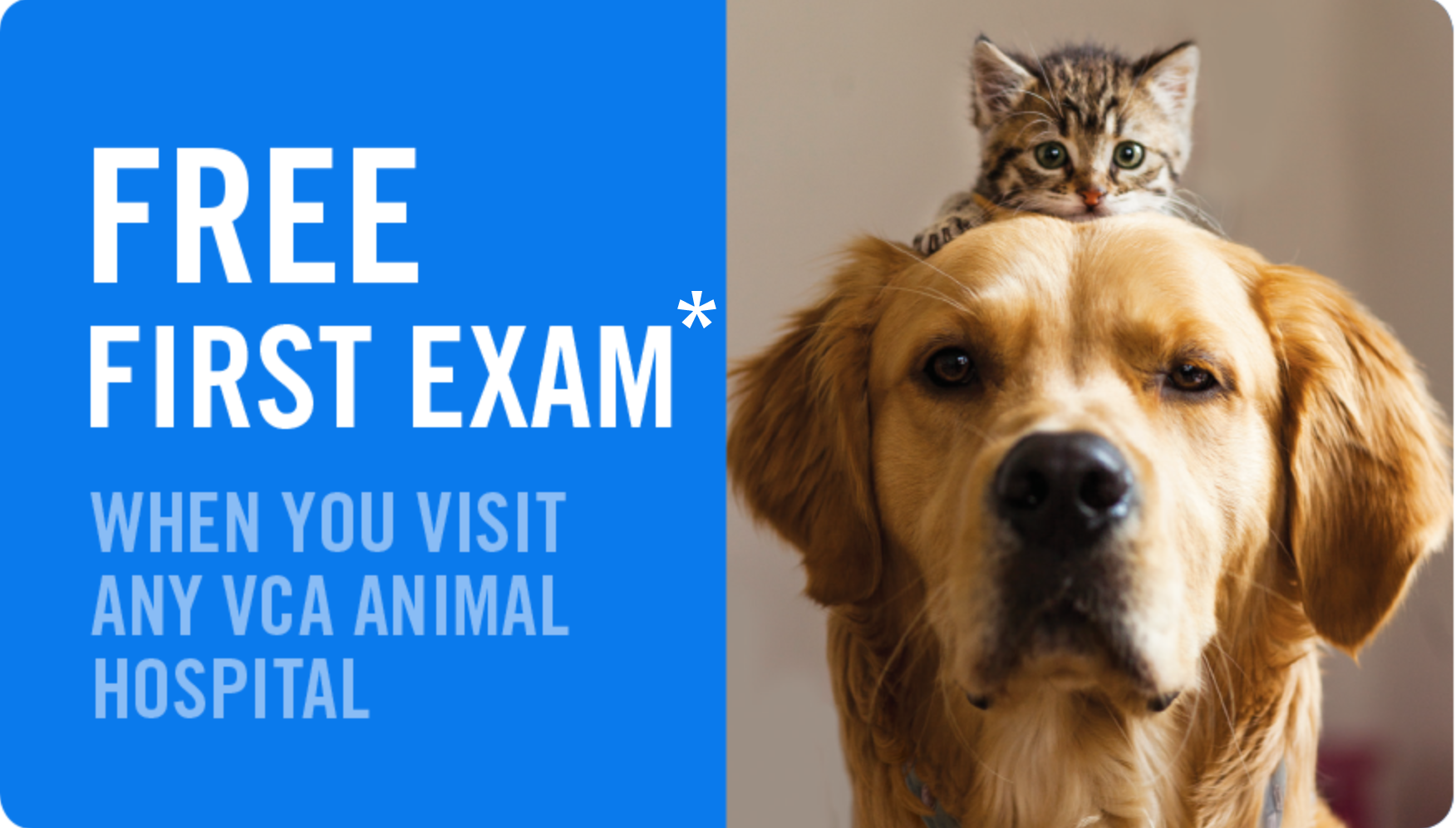 Ffe Coupon Veterinary Services Animal Hospital Veterinary Clinic