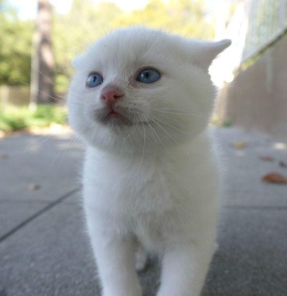 cute white kitten exploring world