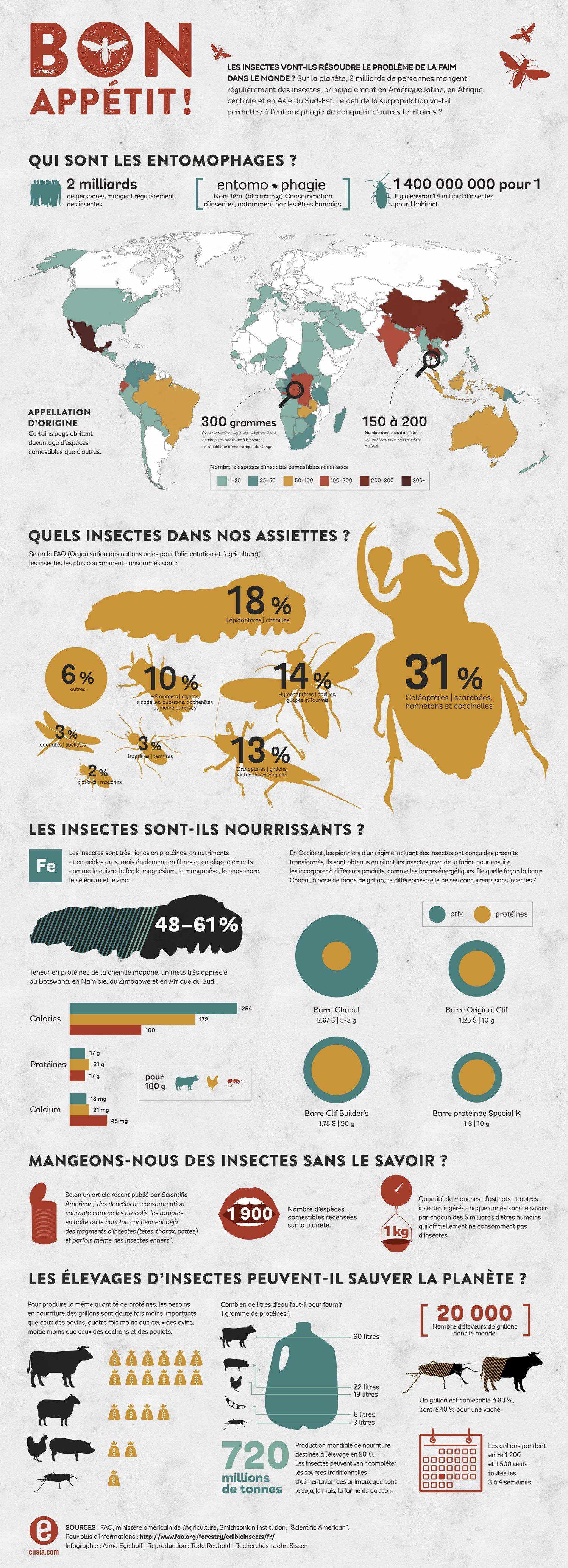 Savoureux, nutritifs, abondants, les insectes sont au menu de 2 milliards de personnes sur la planète.
