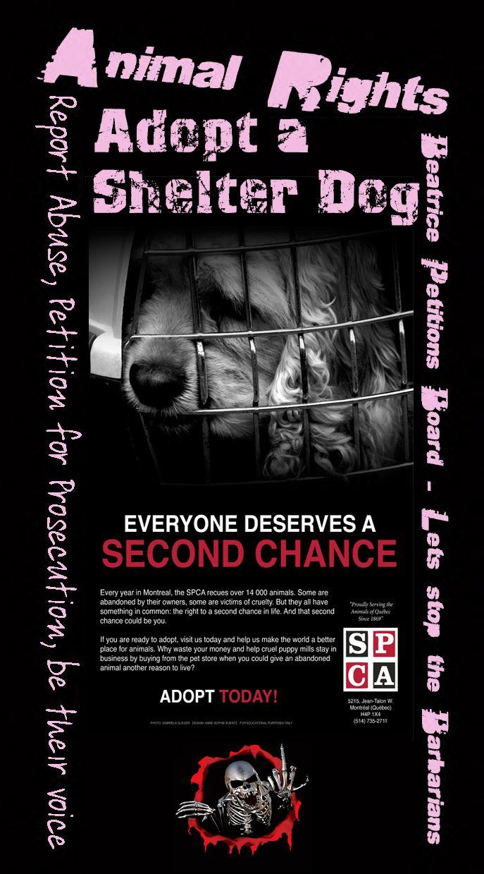 """Adopt a shelter Dog or Cat - Save a life - Adopt do not shop!"""