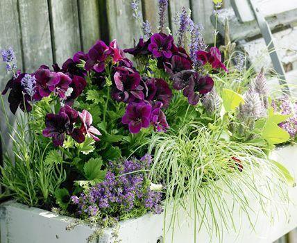 balkonkasten mit federbusch lavendel und edelgeranien terrasse diy garden projects potted. Black Bedroom Furniture Sets. Home Design Ideas