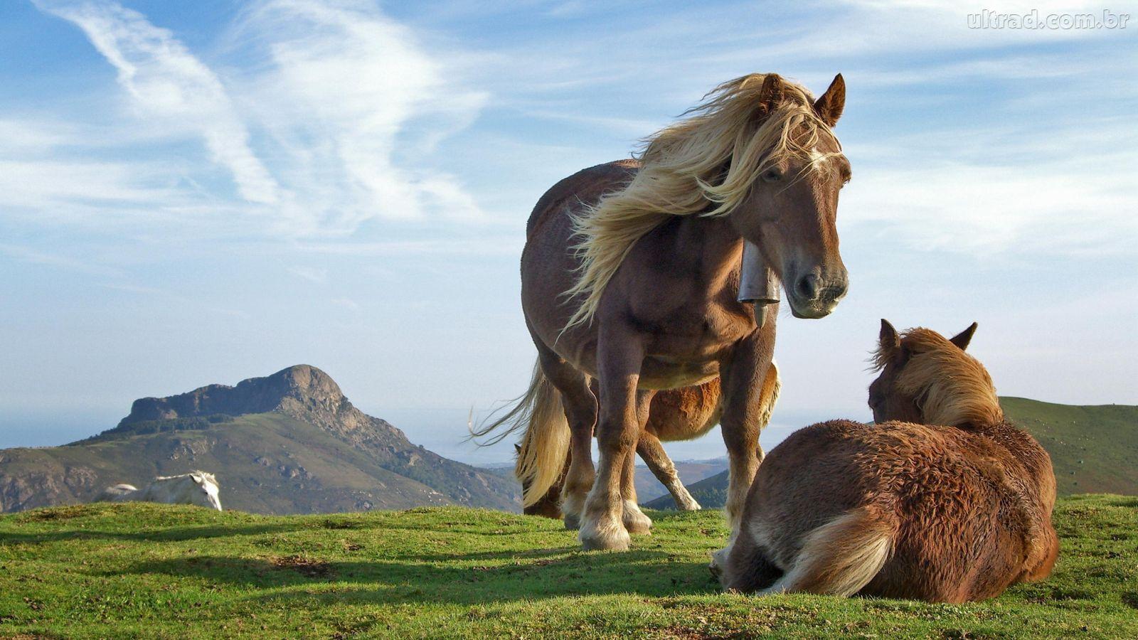 ... Os dias se vão como cavalos sobre a colina.    ¬U2¬