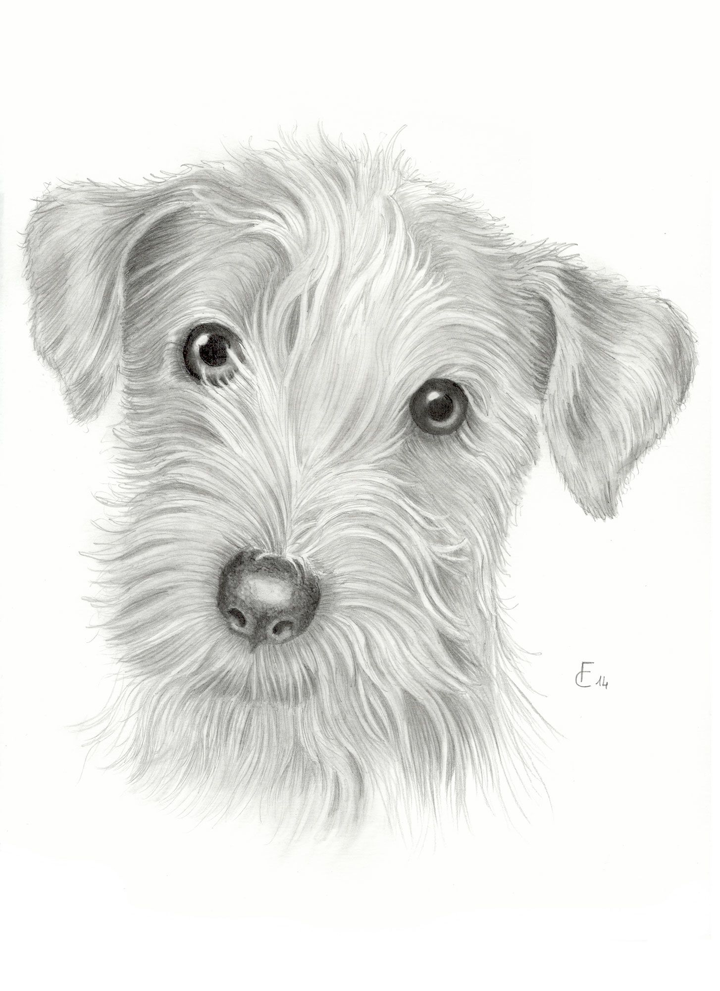 Disegni A Matita Disegni Dogs Drawings E Painting