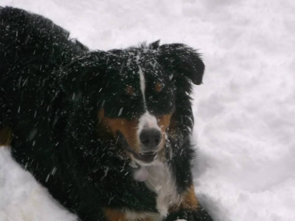 Her name is Bella, she loves snow, and we love her !