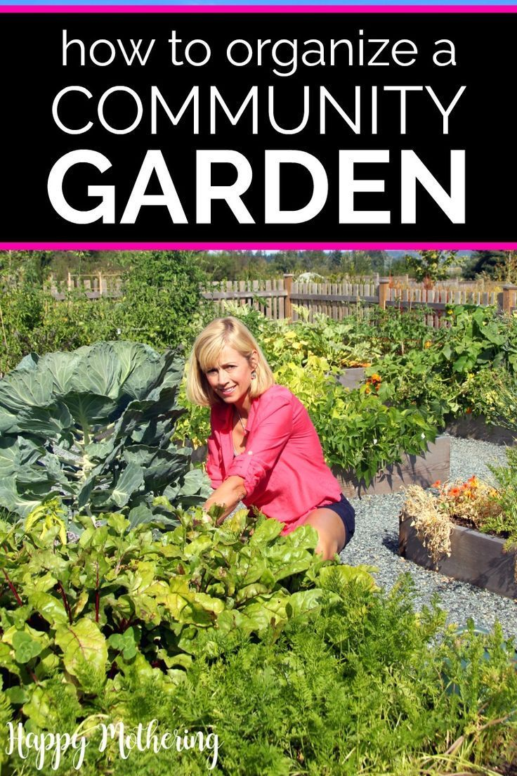 How to Start a Community Garden | Garden planning, Indoor ...