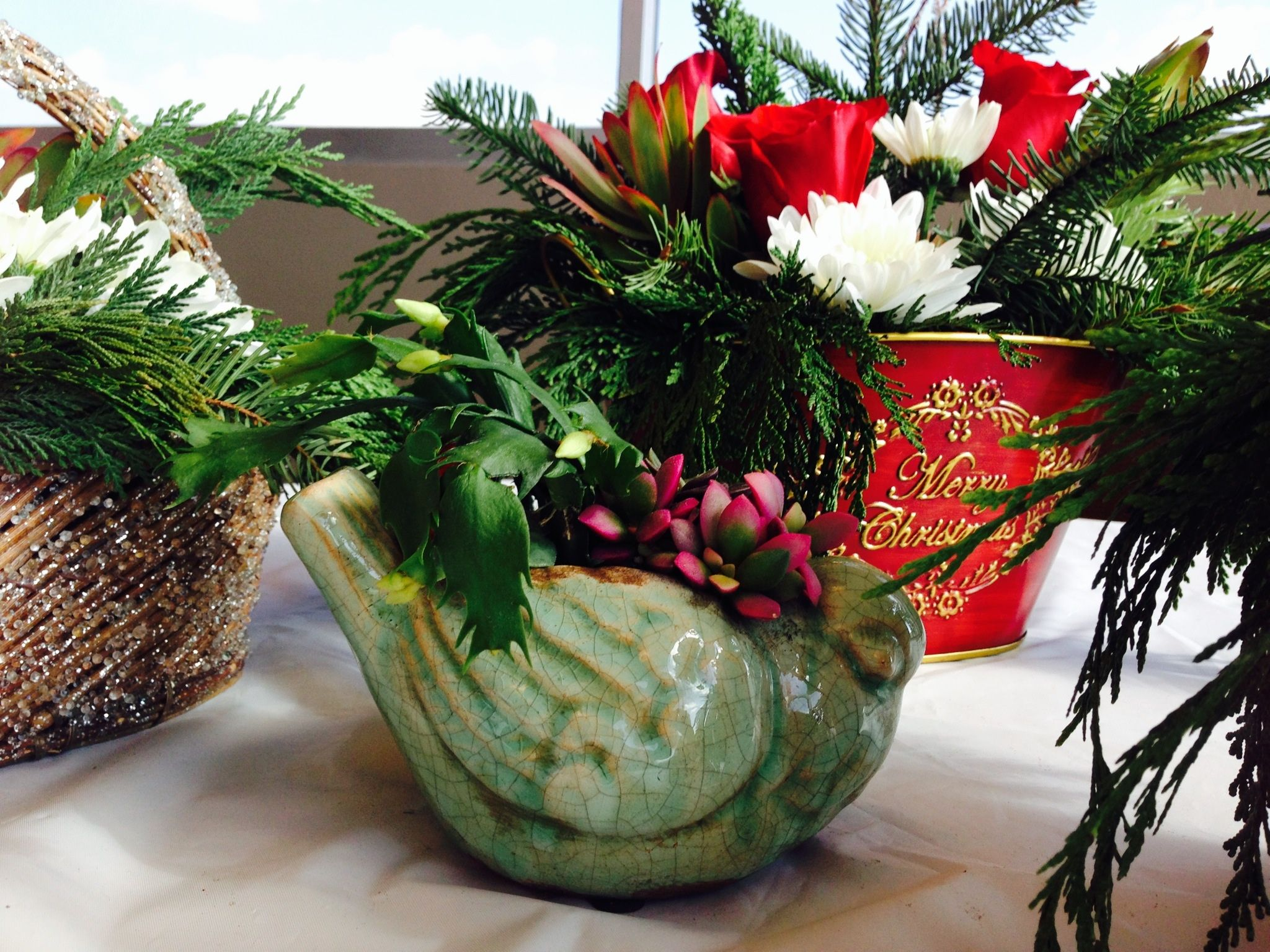 Succulents for Christmas All things christmas