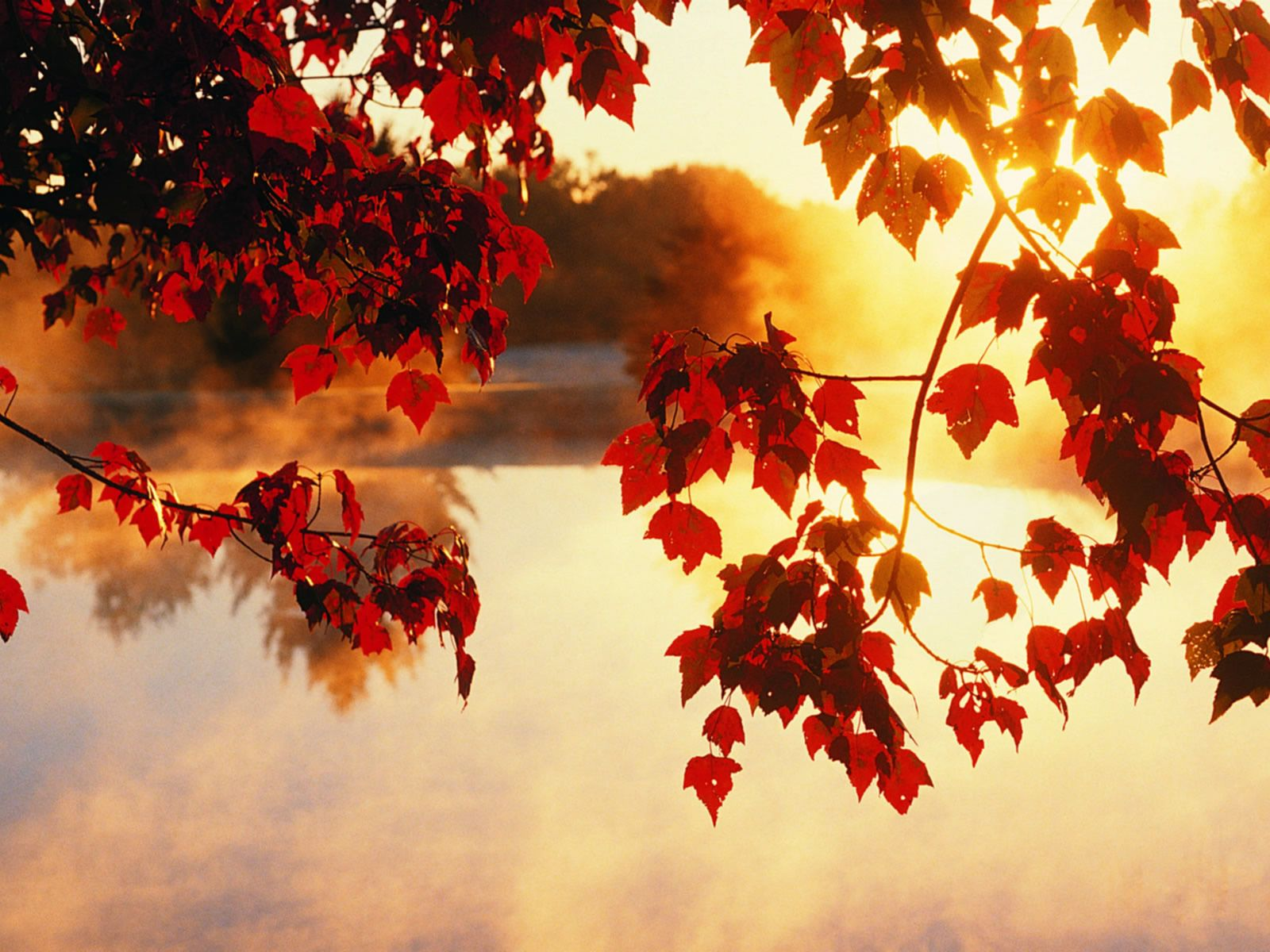 Red Autumn Sunshine Wallpaper Hd With Images Fall Wallpaper