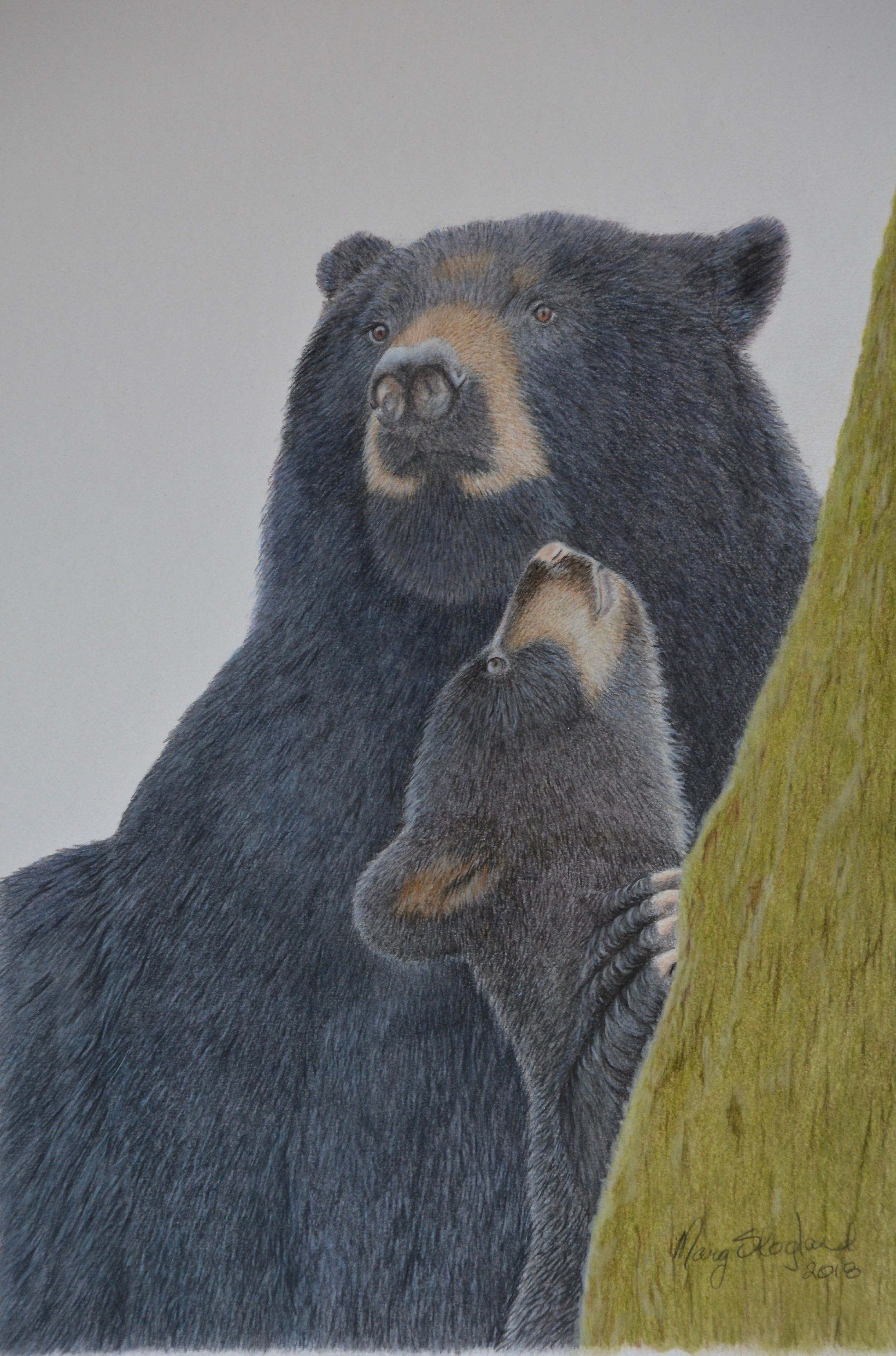 "Original Art 20""x16"" Coloured Pencil Drawing of a Black Bear and"