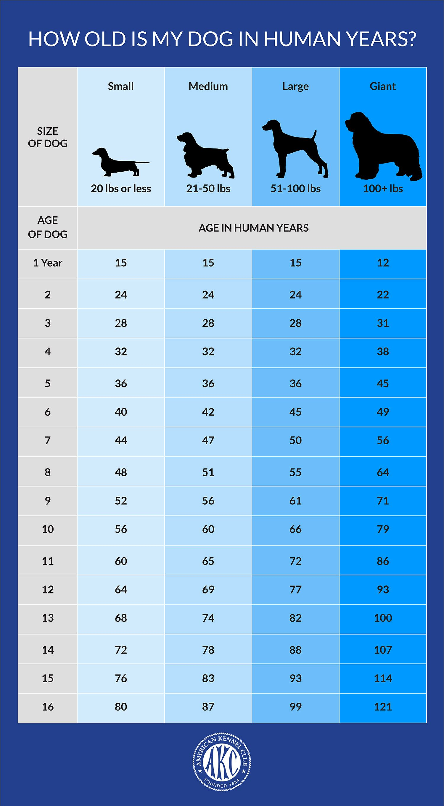 Your Dog S Age In Human Years A Conversion Chart Dog Ages Dog