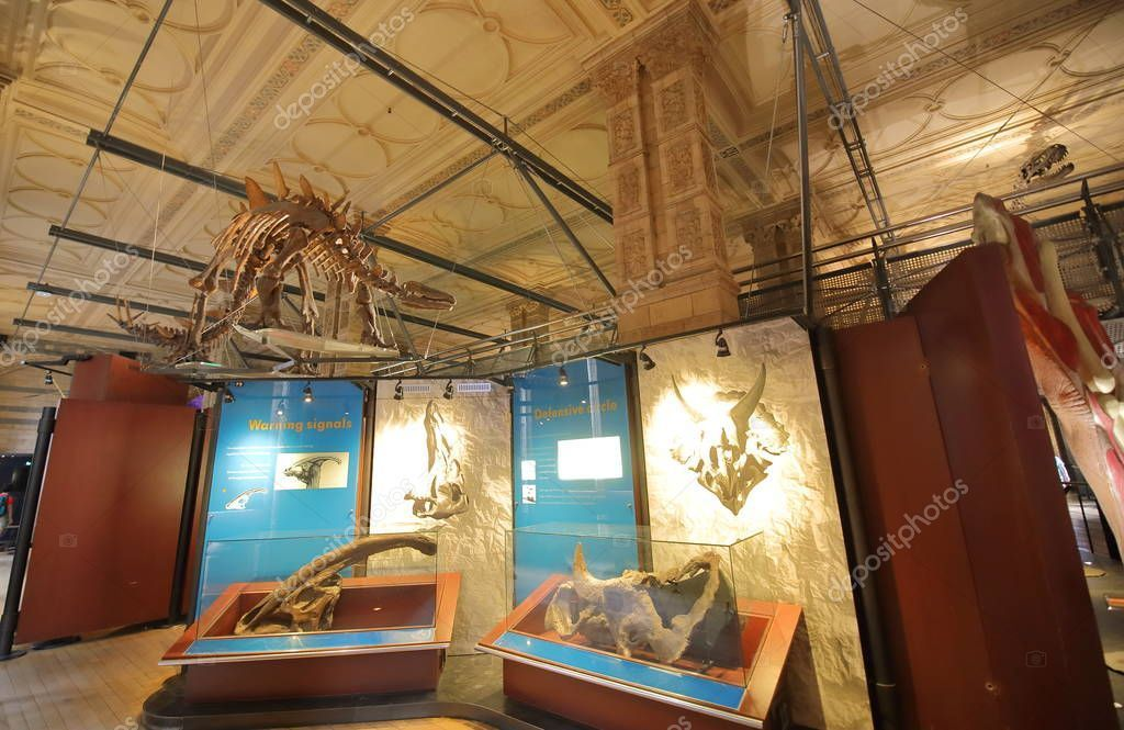 London England June 2019 Dinosaur Exhibition Natural History Museum London #historyofdinosaurs London England June 2019 Dinosaur Exhibition Natural History Museum London #historyofdinosaurs