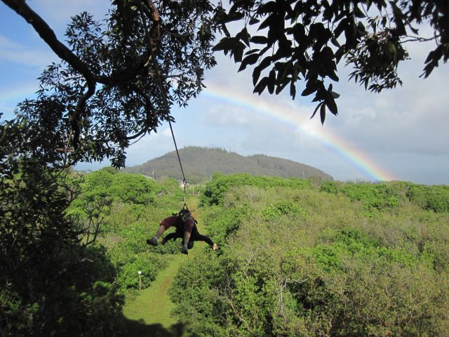 Find out where Maui Ziplines rank on the list of Top 10 Maui Activities #Hawaii