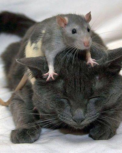 unglaubliche tierfreundschaften inspiration pinterest katzen tiere und lustige katzen. Black Bedroom Furniture Sets. Home Design Ideas