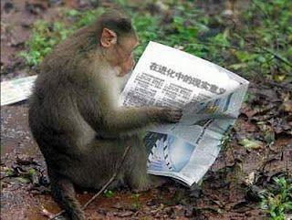 Monyet Lucu Monyet Lucumonyet Lucu Galaumonyet Lucu Wallpaperanimasi Monyet