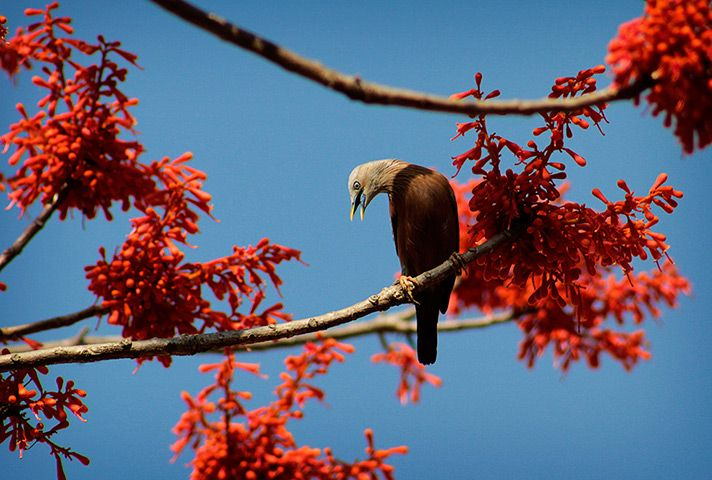 India photograph pinterest india a bird collects nectar as flowers bloom marking the arrival of spring season in agartala india on monday march ap photosushanta das mightylinksfo