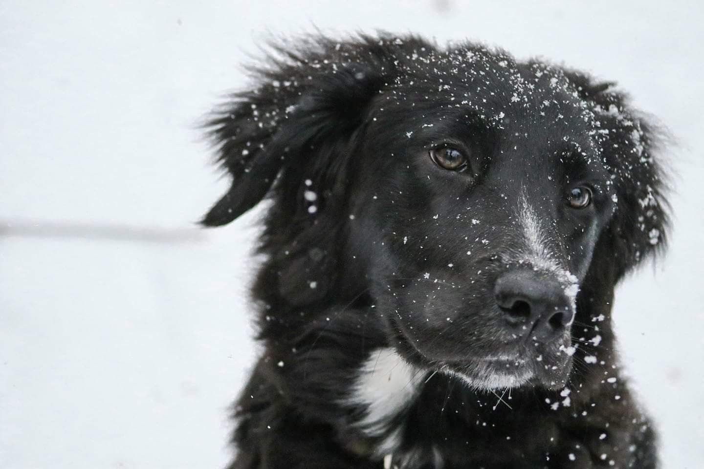 Piercing bump with pus  Pin by Barbara rathmanner on Hunde im schnee   Pinterest