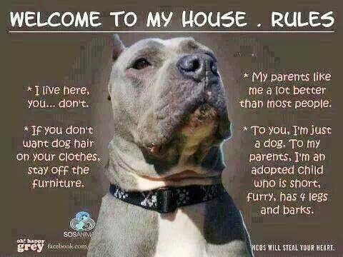 Welcome To My House Rules I Live Here You Don T If You Don T Want Dog Hair On Your Clothes Stay Off The Furniture My Pitbulls Pitbull Dog Pitbull Terrier