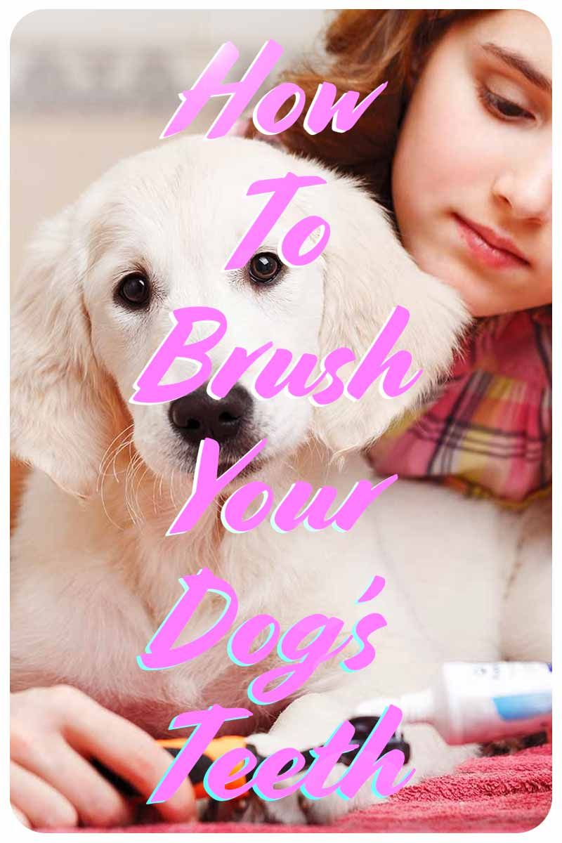 Dog dental care and how to brush your dogs teeth without