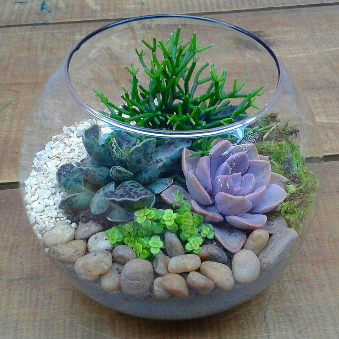 Perfeito para decorar succulent succulents suculentas terrarium