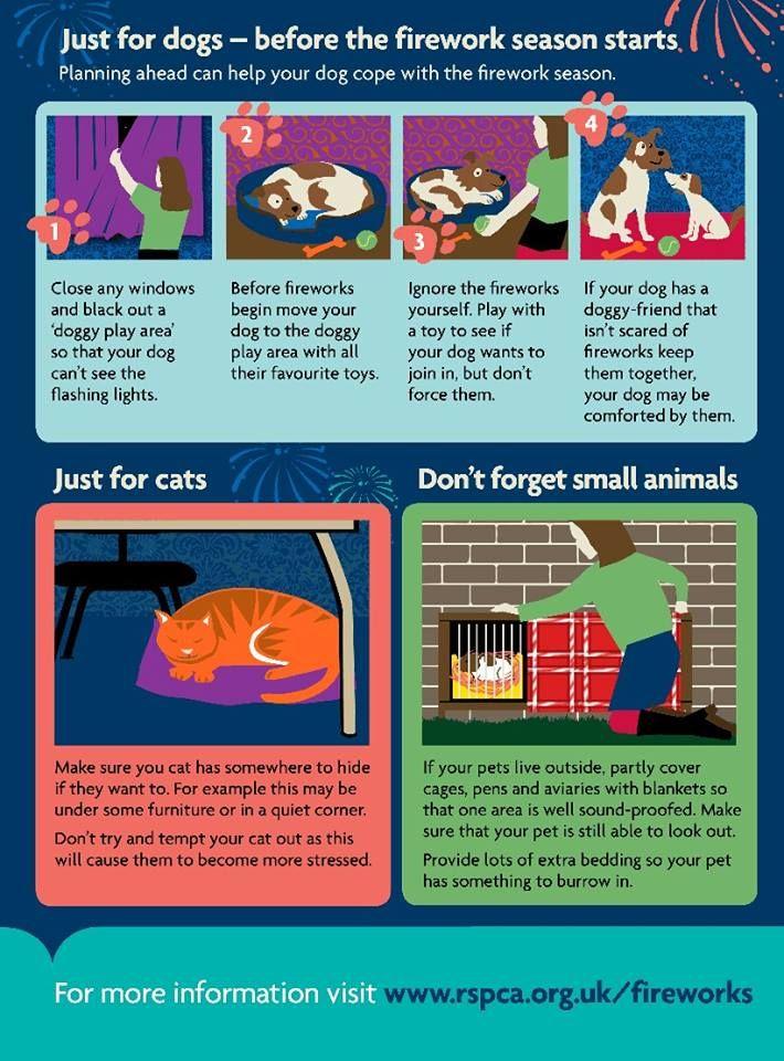 Rspca Macclesfield On Twitter Pet Safe Bonfire Night Embedded Image Permalink